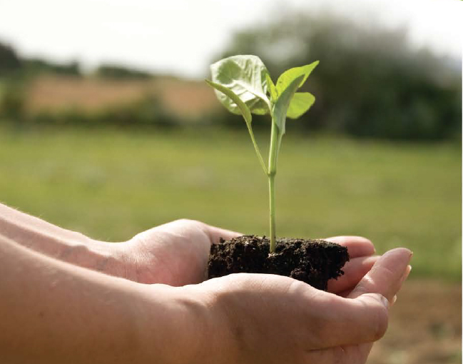 A plant sprouting from soil in someones hands.