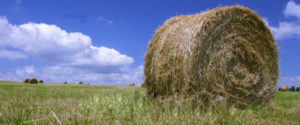 A hay bale in a field.